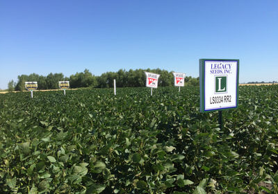 Legacy Seeds sign in a soybean field