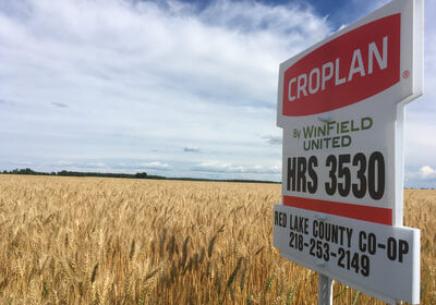 Croplan sign in a wheat field